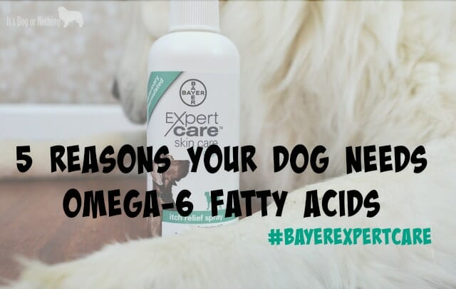 5 Reasons Your Dog Needs Omega-6 Fatty Acids #BayerExpertCare