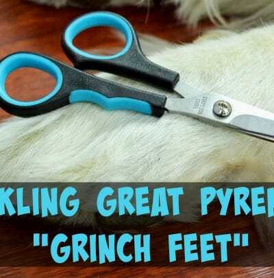 Tackling Grinch Feet + Grooming Giveaway!