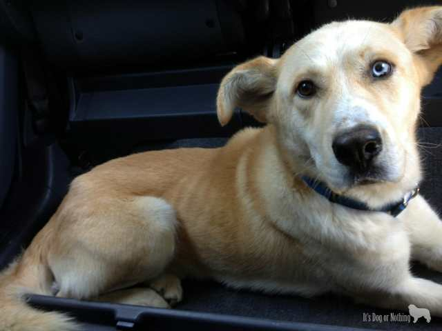 """Kaeto's """"Gotcha"""" picture. In our car and leaving the shelter!"""