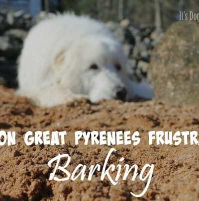 Will My Great Pyrenees Bark All the Time?
