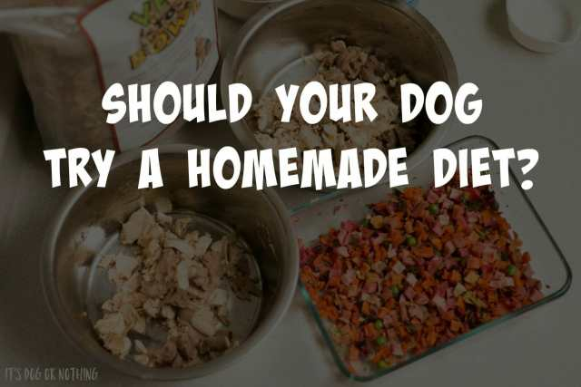 There are several reasons for wanting to switch your dog to a homemade diet. Do you think your dog would benefit from a homemade diet? Click through to read the rest.