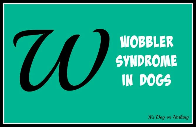 Wobbler Syndrome In Dogs It S Dog Or Nothing