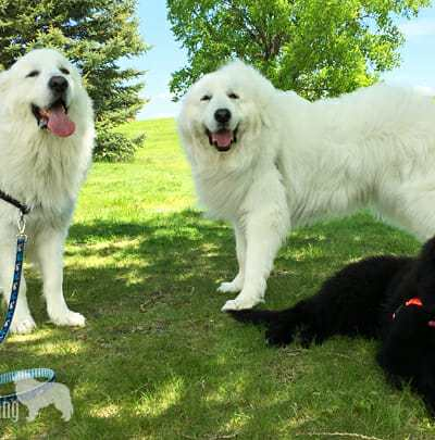 Hiking, a Newfie, and Pictures, Oh My!