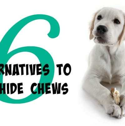 6 Alternatives to Rawhide Chews
