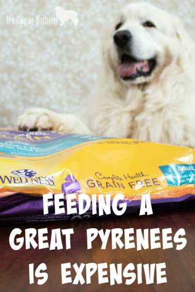 """One of the first things I'm always asked about Great Pyrenees is, """"How much do they eat?"""" Today, I'm answering that question and giving my recommendation for the perfect food."""