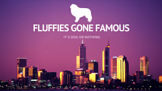 It's Dog or Nothing | #FluffiesGoneFamous