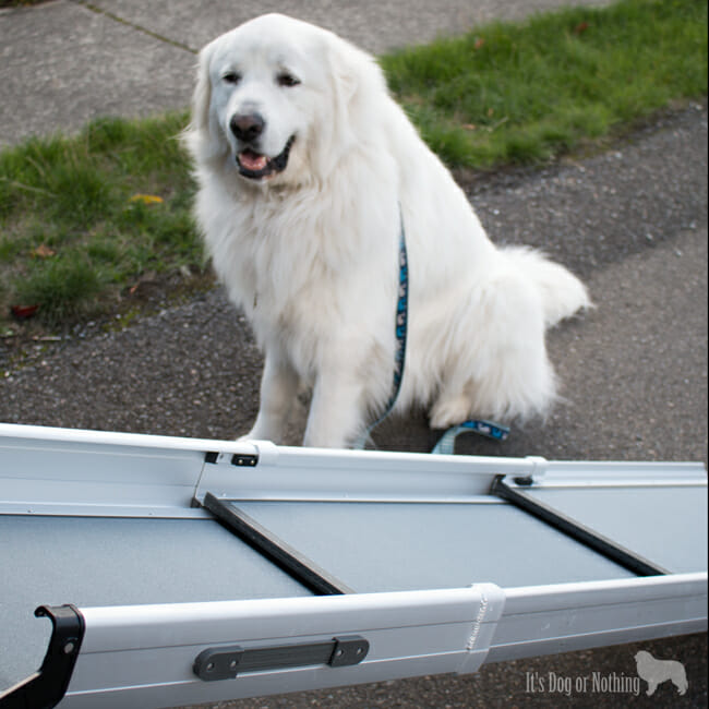 Many of us think that since our giant breed dogs are completely healthy, we don't need to worry about their joints until they get older. We have three reasons why you should consider using a pet ramp for your giant breed dog as well as some information about the Solvit Deluxe Tri-Scope Pet Ramp.