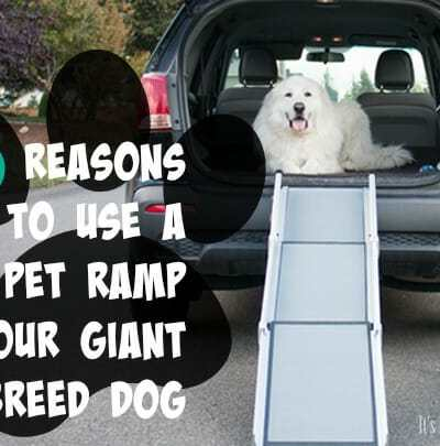 3 Reasons to Use a Pet Ramp for Your Giant Breed Dog