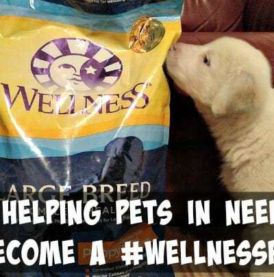 Helping Pets in Need Become a #WellnessPet