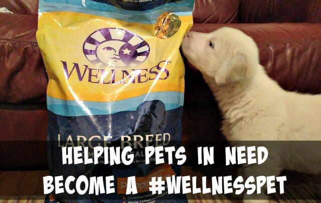 Does your pet food company give back? Wellness Pet Food helps to provide pets in need with healthy food.