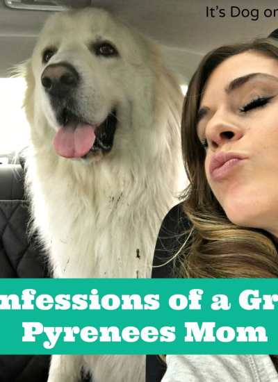 Confessions of a Great Pyrenees Mom