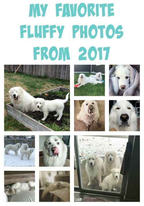 I took a look back at all the photos I took of the fluffies in 2017. Here are my top ten favorite photos!
