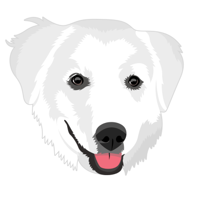 Great Pyrenees | It's Dog or Nothing