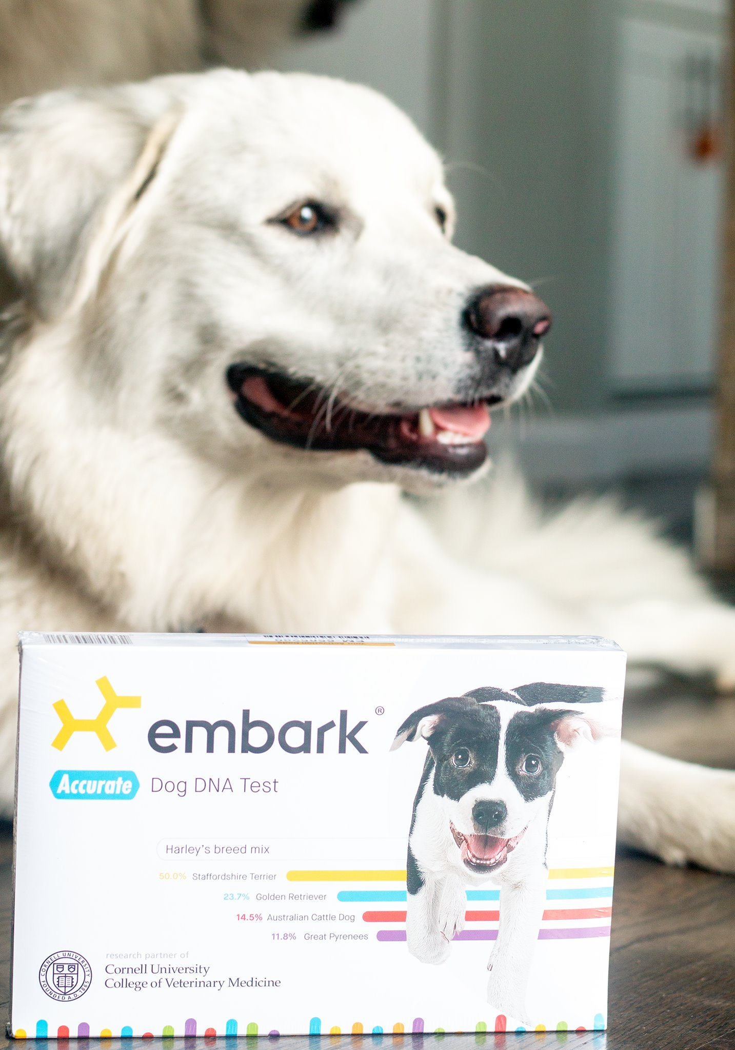 We tried the Embark DNA test to determine Kiska's breed(s)!