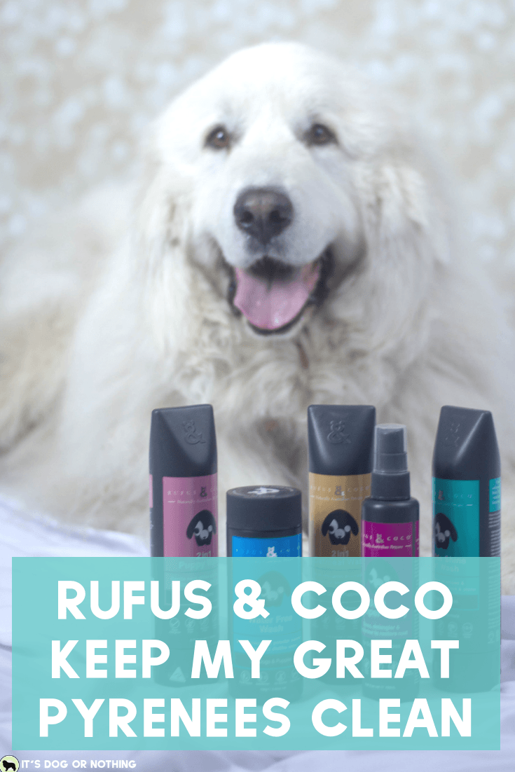 Pacific Northwest winters are rough, y'all. Keeping my Great Pyrenees clean and white is a daily struggle. I hate bathing them frequently because it isn't good for their fur, but they need sprucing! That's why I'm loving Rufus & Coco's Water Free Wash. #whatadogwants #petsmartgrooming #newtopetsmart #rufusandcoco #naturallyaustralian #feellikeashowdog