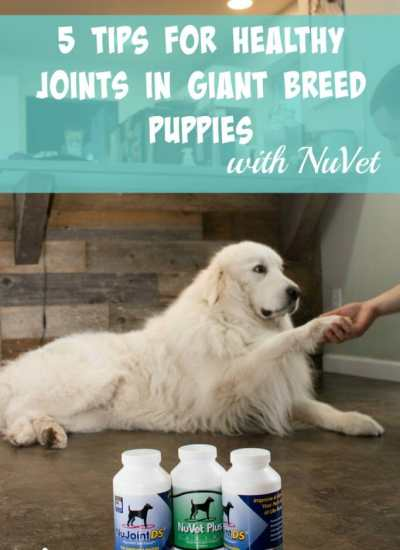 5 Tips for Healthy Joints in Giant Breed Puppies with NuVet
