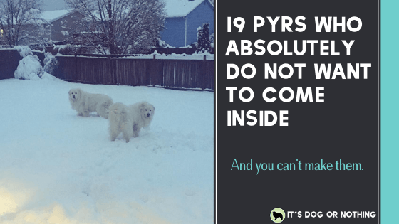 If it's too cold for you, it's just pyrfect for them! Check out these 19 pyrs enjoying snow life ❤️