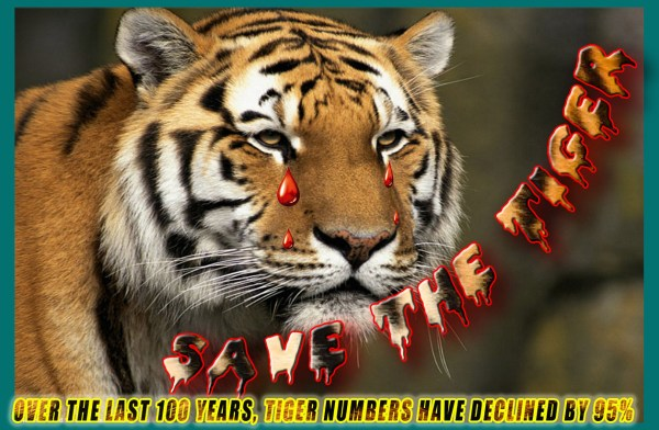 8. Save Tiger Poster Clipping Mask Itsdpssurat
