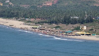 Photo of Morjim Beach – Olive Ridley Turtles and Russian Tourists.