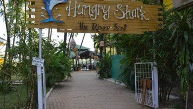 Photo of HUNGRY SHARK – THE RIVER NEST