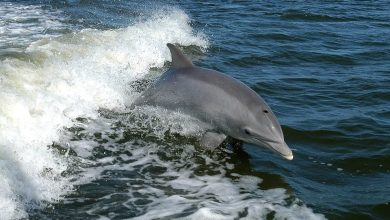 Photo of DOLPHIN SPOTTING