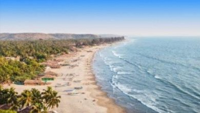 Photo of 5 experiences that will make you fall in love with Goa