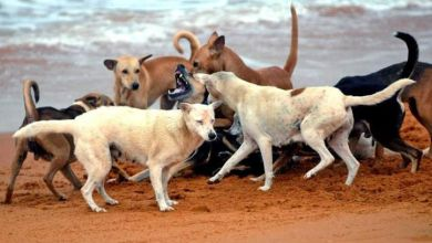 Photo of Menace of Strays – Mission Curb, Mission Impossible?