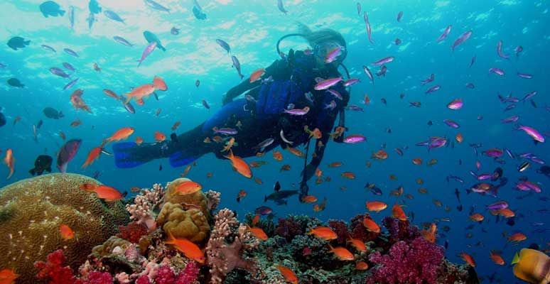 Go Scuba diving, snorkeling and fishing at Grande Island in Goa.