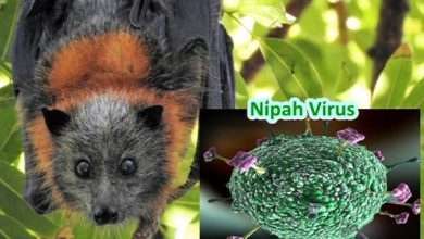 Photo of No Nipah virus alerts for Goa says state government