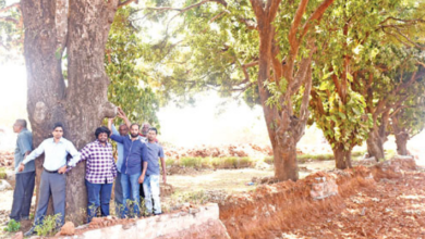 Photo of Goa stands strong against the felling of trees on NH66