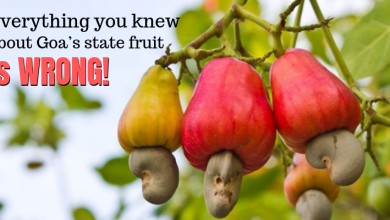 Photo of Everything you knew about Goa's state fruit, the Cashew, is wrong