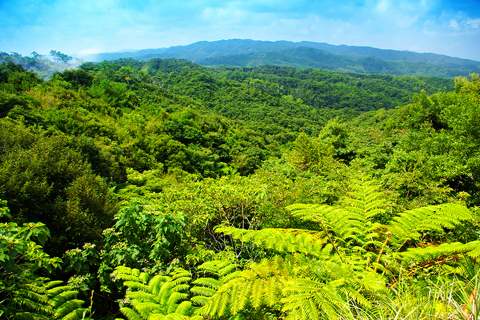 Yanbaru landscape