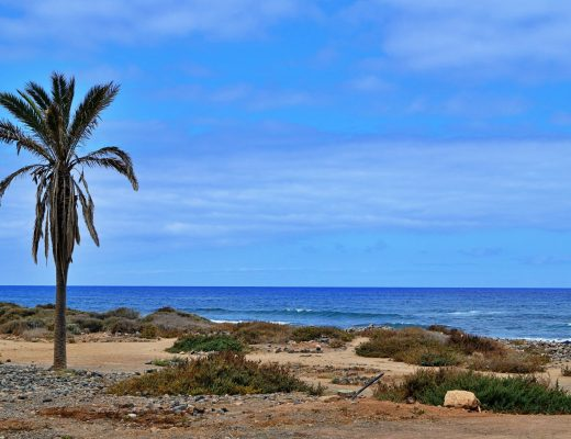 Tenerife coastline with palm tree