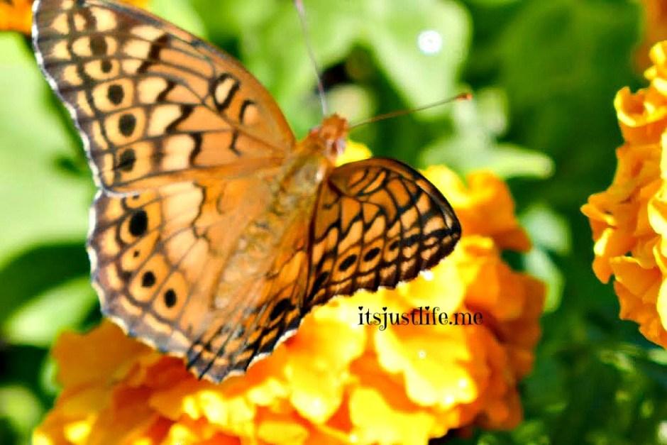 butterfly5