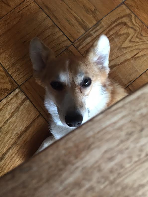 Playing Peek A Boo