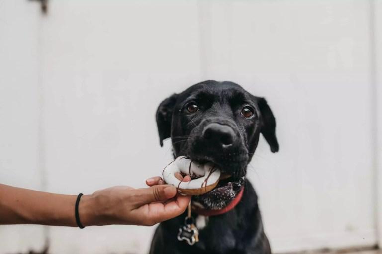ITSKOO Smart Automatic Pet Feeder