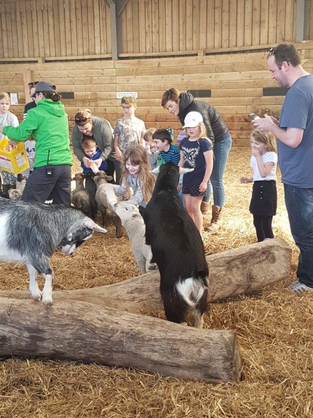 World of country life lamb feeding