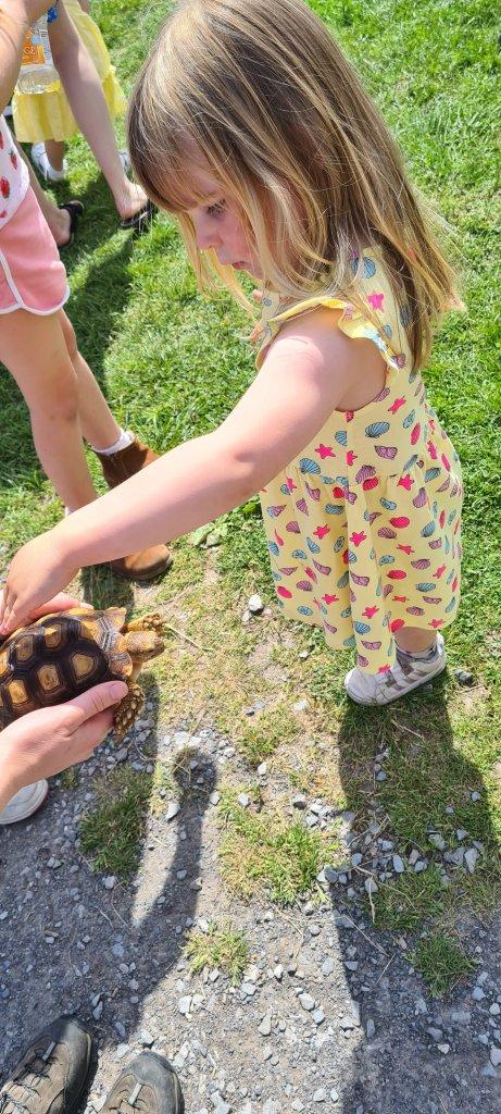 Animal Encounters at Animal Farm