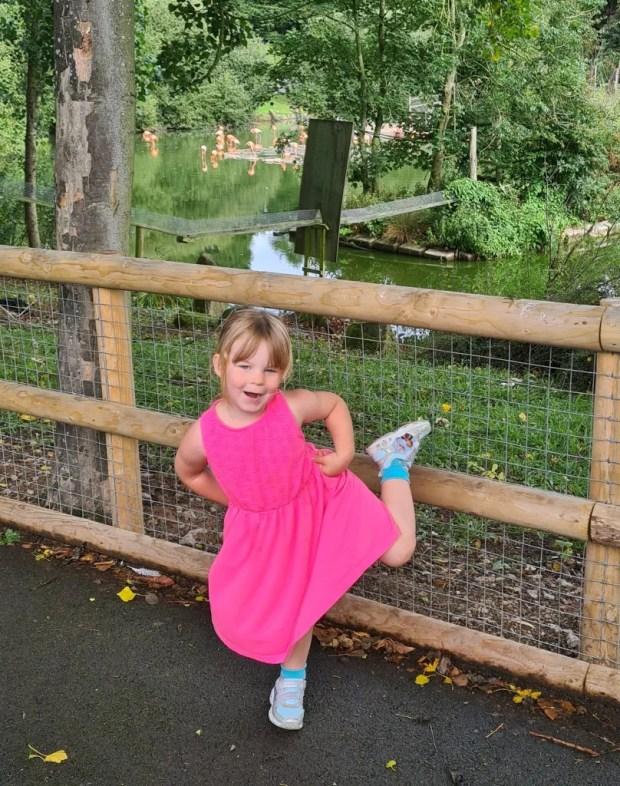 Blackpool Zoo Flamingos