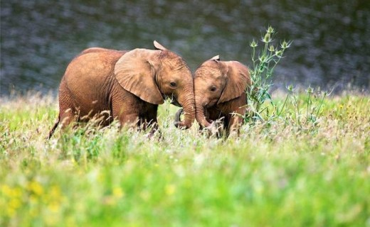 Beautiful elephant-HD wallpapers-2013