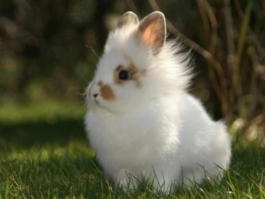 cute-rabit animal-picture-2012-2013
