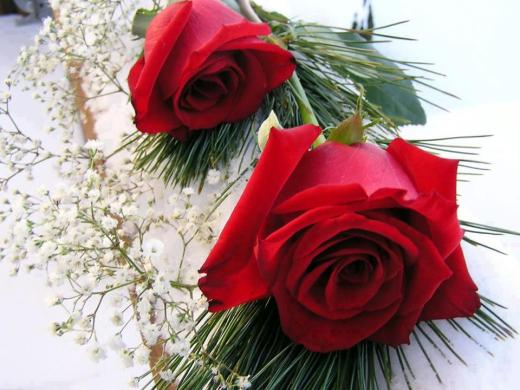 Best-Red-Rose-Picture-for-girlfriend-facebook