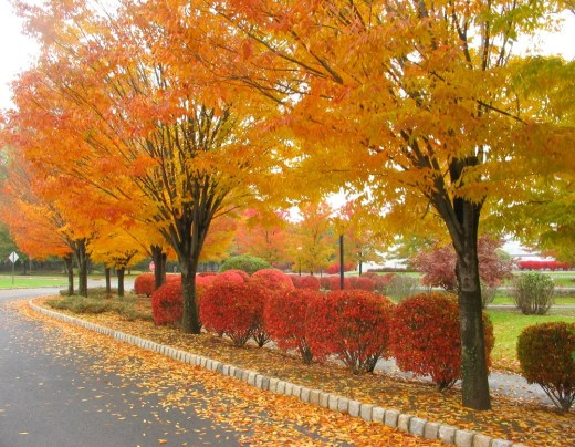 autumn-dry-leaves-wallpapers-2013-2014