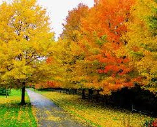 beautiful-natural-autumn-season-high-quality-wallpapers-2013-2014