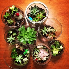 I Learned How to Make (and Spell) Terrariums