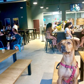 Best Dog-Friendly Places in Houston for Every Occasion