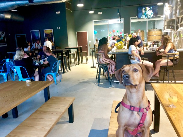 dog-friendly houston places