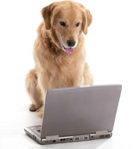 DogLaptop