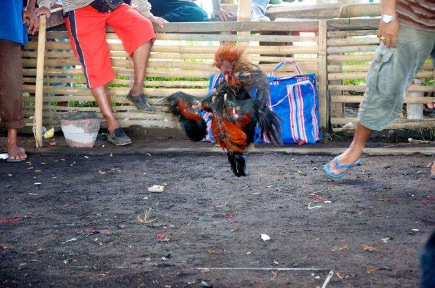 Бои на Бали