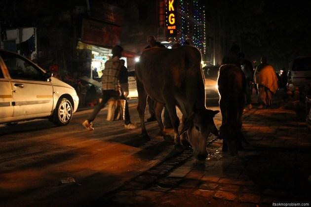 Настоящая Индия на Мэйн Базаре фото. Коровушка. Holy cow